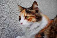 Заражённая вирусом кошка может долго казаться здоровой.