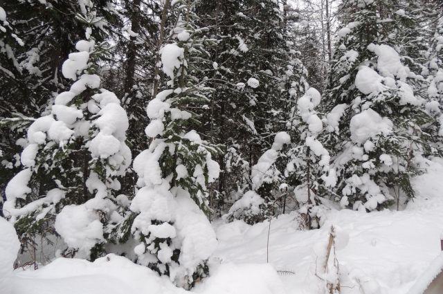 Тюменские полицейские будут охранять елки