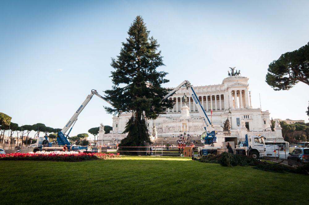 Официальная рождественская ель города на Пьяцца Венеция в Риме.