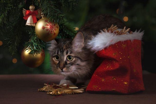 Узнать о правильных подарках можно с 10 по 21 декабря.