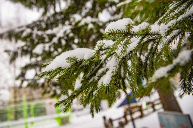 Морозы в Новосибирской области пошли на спад.