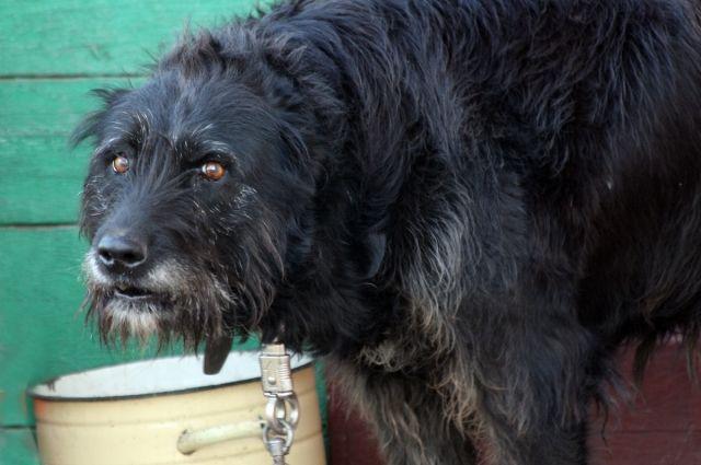 В Октябрьском районе пьяную женщину покусала собственная собака