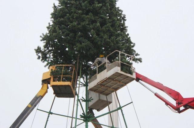 Началась установка главной елки края.