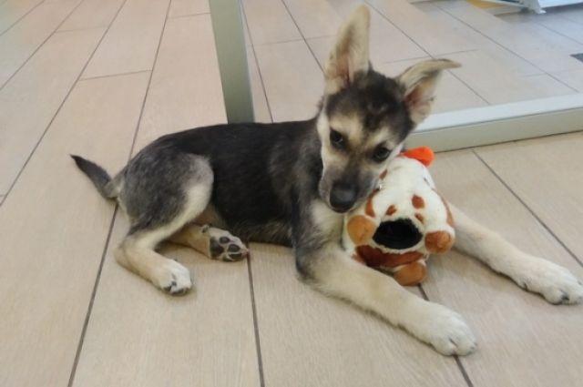Ева - так назвали щенка библиотекари, очень любит игрушки и детей
