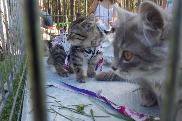 В Новосибирске часто проходят ярмарки-раздачи животных.