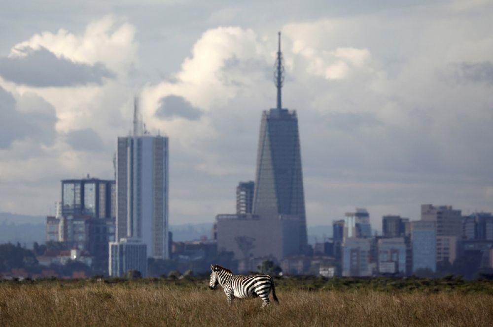 Зебра в Национальном парке Найроби в Кении. Парк начинается в 7 км от городского центра, от города животных отделяет лишь забор.