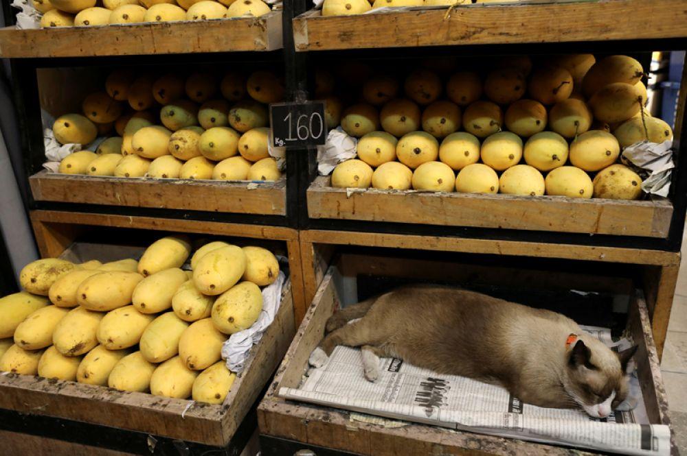 Кошка спит в коробке из-под фруктов магазине в Бангкоке, Таиланд.
