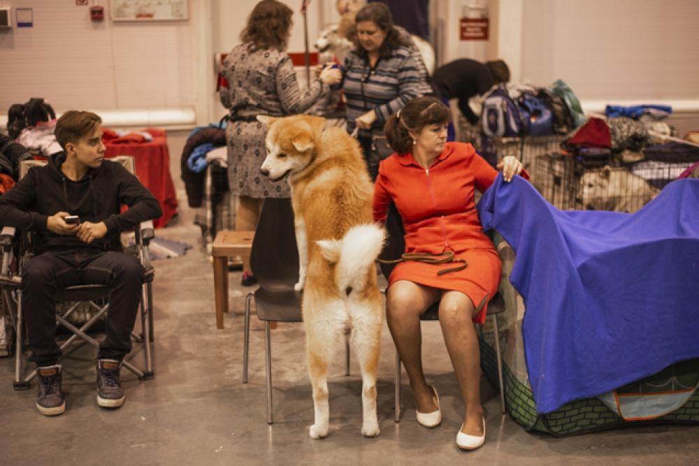 Не только щенкам, но и взрослым собакам не терпелось порезвиться.