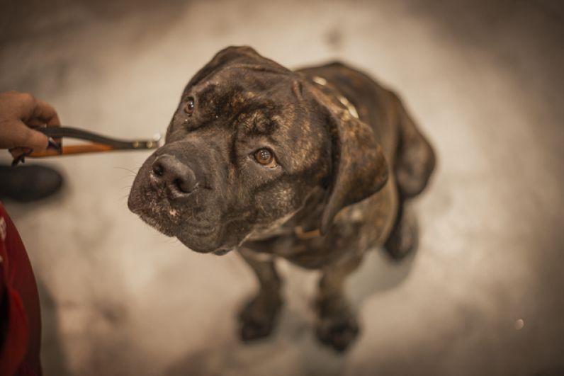 Крупных собак владельцам лучше держать на поводке.