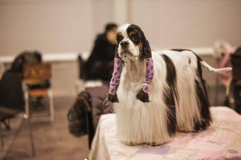 Собак привели на выставку во всеоружии.