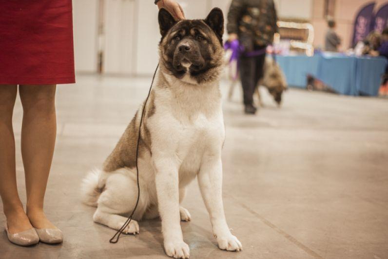 На выставку  владельцы пришли не только со взрослыми собаками.