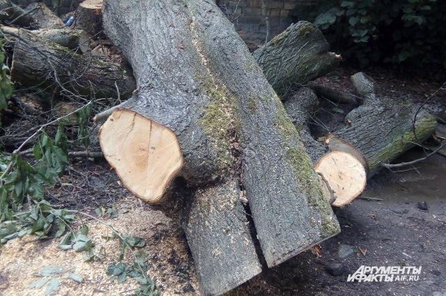 Всего с начала текущего года под санитарную вырубку попали около двух тысяч деревьев.