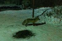 Животное бегало недалеко от школы №7.