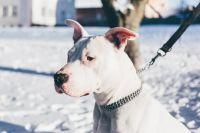 Тюменцы разработали сервис, чтобы найти помощника для выгула собаки