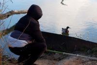 Травмированный селезень остался один на замерзающем пруду.