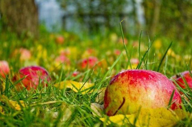 Ученые назвали фрукт, который может помочь в борьбе с раком