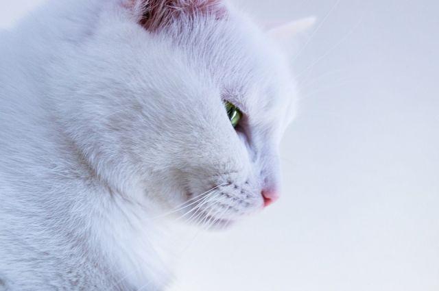 Дорогой кот...
