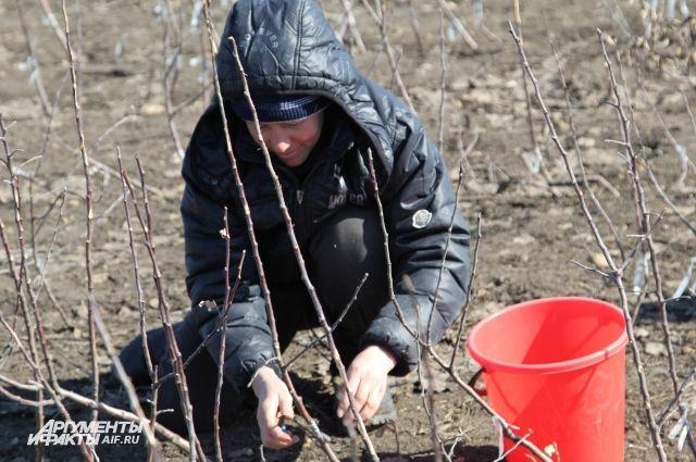 С нового года садоводы и огородники будут платить за свои «сотки» через банк.