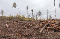 В Украине разрешат продажу леса через аукционы