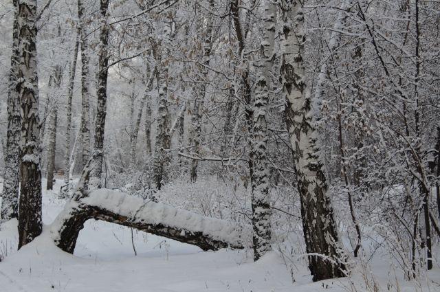 Ожидаются снегопады, местами возможны метели.