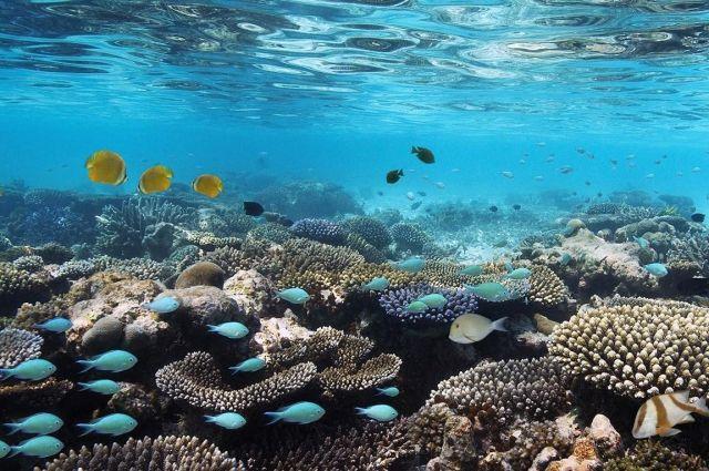 Ученые обнаружили на дне моря новые, неизвестные науке виды животных