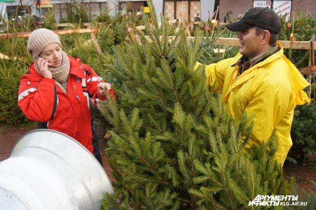 В Калининграде открылись елочные базары.