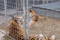 Минэкологии планирует запретить в Украине использования диких животных в цирках и введения административной ответственности за это.