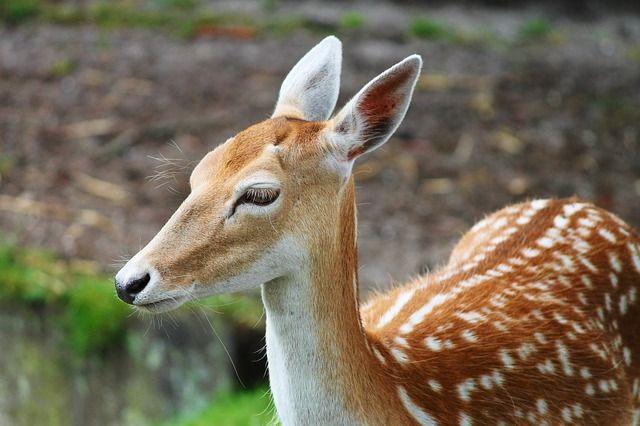 Суд США обязал браконьера смотреть раз в месяц мультфильм «Бэмби»