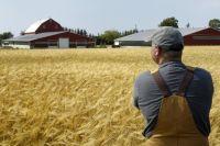 Правительство полностью изменит систему социальной поддержки фермеров