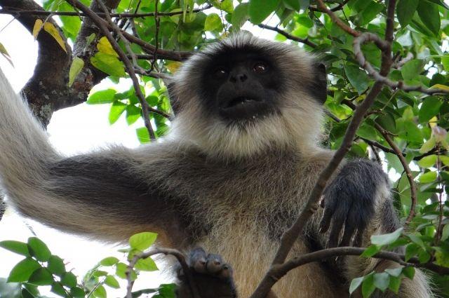 Мелкие приматы - очень нежные родители.