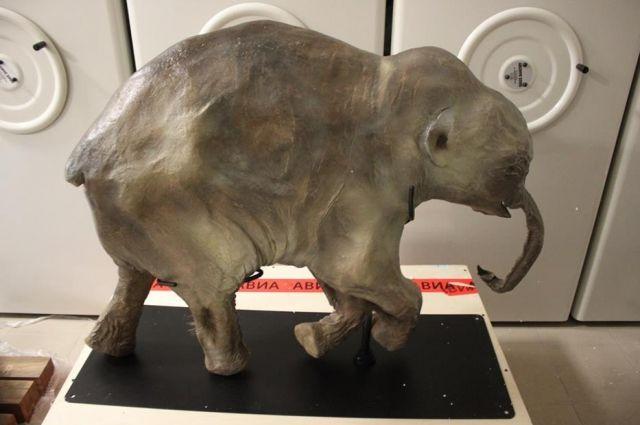 Малютке 42 тысячи лет, а ее биологический возраст – не больше года.
