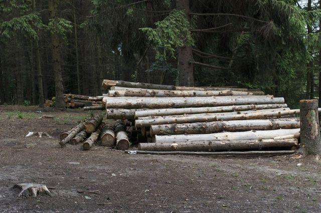 Несколько тысяч кубов леса незаконно вырубили в НСО.