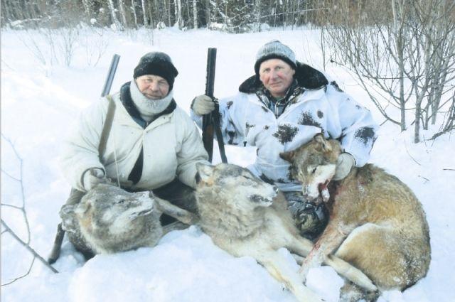 Некоторые считают, что масштабные вырубки лесов нарушили привычный  ореол обитания хищников. Поэтому волки и стали наведываться в селения.