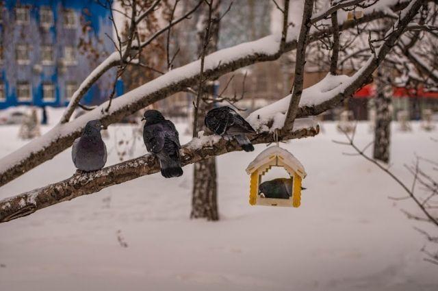 Морозы задержатся в Новосибирске на несколько дней.