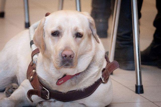 Слепому грозили вавтобусе вЕкатеринбурге из-за собаки-поводыря