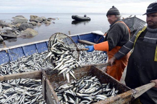 Незадачливого рыбака привлекли к ответственности.