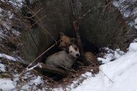 Во Львовской области  две собаки застряли в заброшенном колодце