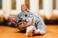 Трудности перевода. Как заменить в меню кошки сухой корм – на натуральный