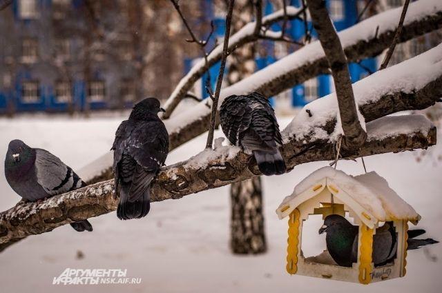 Морозы вернутся в Новосибирск 24 декабря.