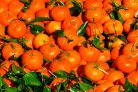 Истинные фанаты марокканских мандаринов живут в Красноярском крае, республике Башкортостан и Пермском крае.