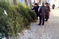 Попытка украсть елку в Киеве завершилась поножовщиной: подробности