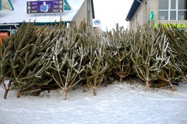 Хвойное дерево лучше покупать на официальном ёлочном базаре.