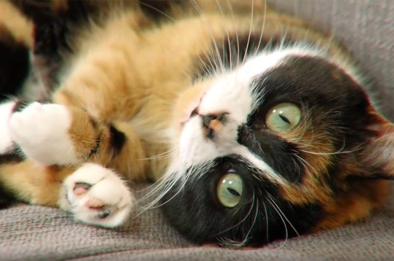 SlivkiShow — 12 млн подписчиков. Создатель канала Юрий Янив снимает видео о приключениях кота Куки, а также развлекательные ролики, где делится лайфхаками разной степени полезности и проводит зрелищные эксперименты, вроде «Что будет, если поджечь 10000 бенгальских огней».