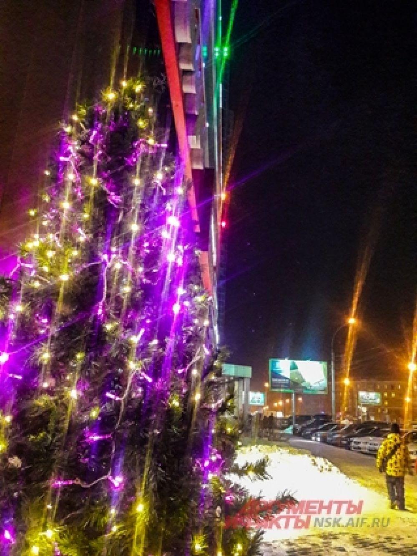 У большинства торговых центров красуются зимние хвойные красавицы.