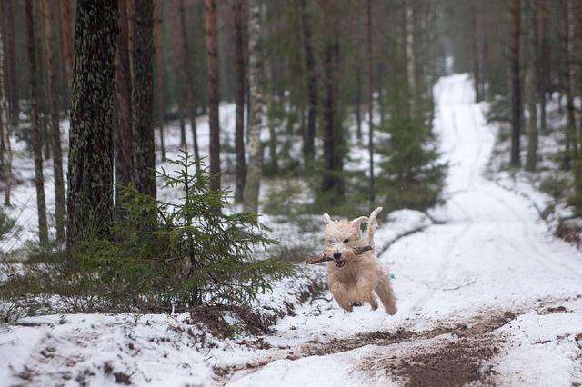 Если у вас щенок, больше гуляйте там, где много народа и шума.
