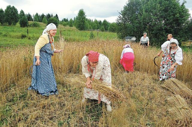 Картофель нынче не в моде, крестьяне перешли на виноград.