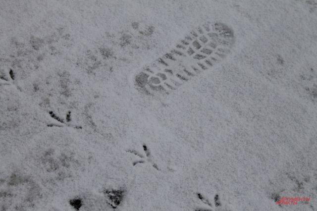 МЧС: в Оренбуржье в пятницу опять будут метель и сильный ветер