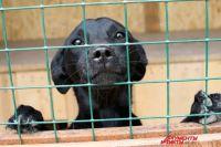 Оренбургский приют для животных за два дня собрал 55 тыс. на электроэнергию