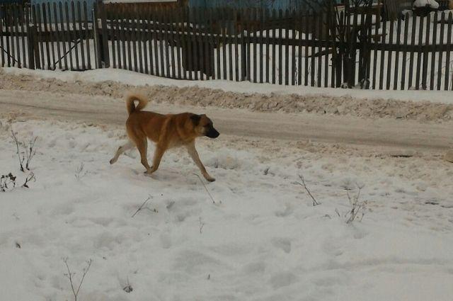 Собака свободно гуляет по улице.