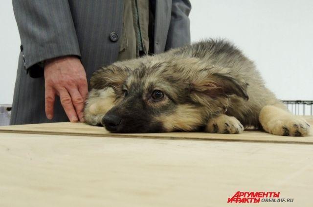 Тюменцы чаще покупают собак